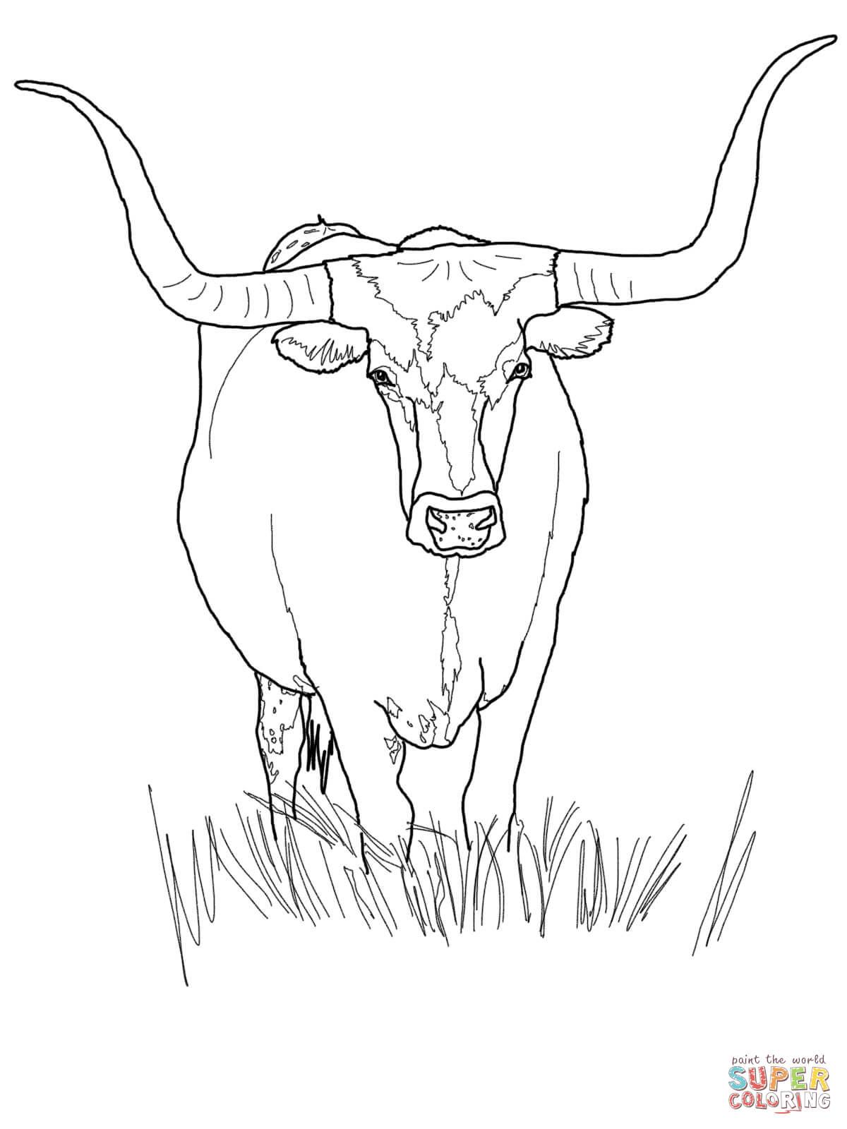 ▷ Stier: Ausmalbilder & Malvorlagen - 15% KOSTENLOS
