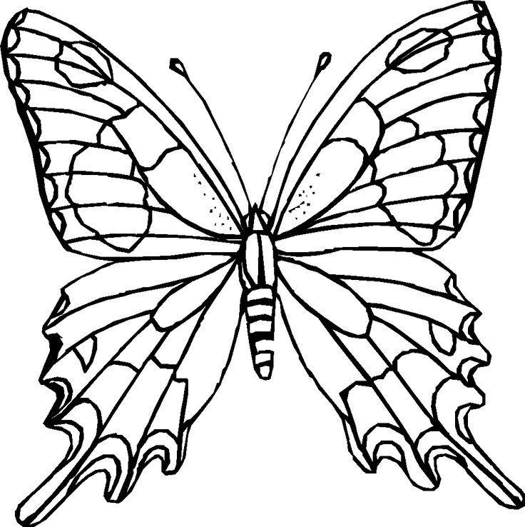 Schmetterling Ausmalbilder