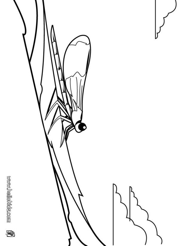 libelle ausmalbilder  malvorlagen  100 kostenlos