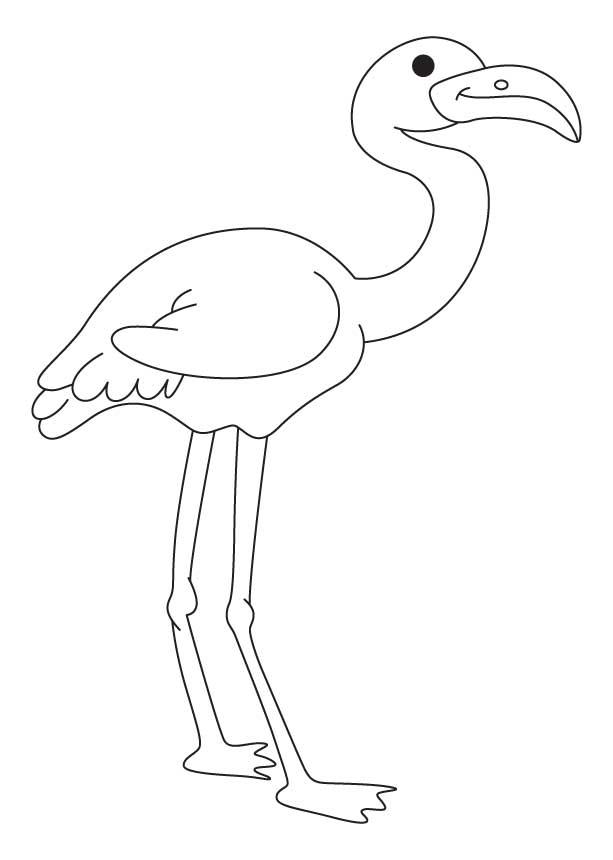 flamingo ausmalbilder  malvorlagen  100 kostenlos