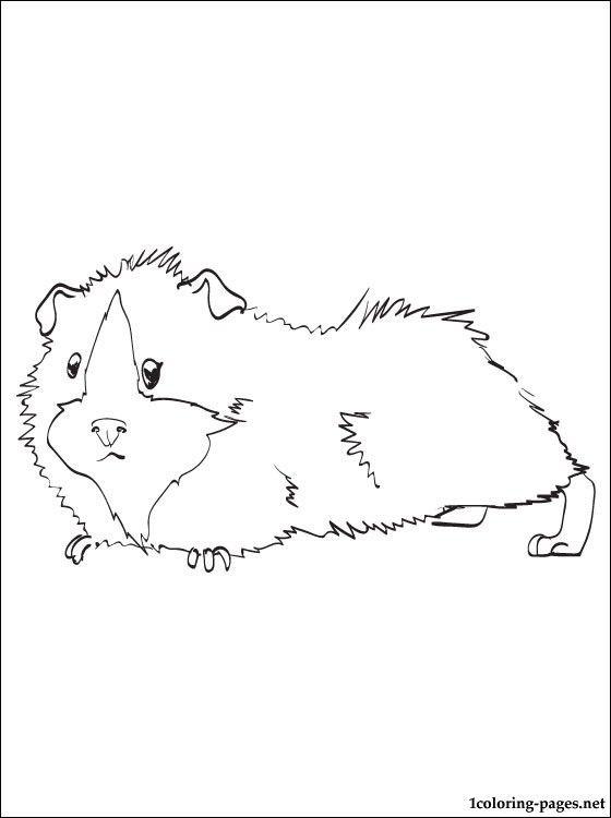meerschweinchen-ausmalbild-0002-q1