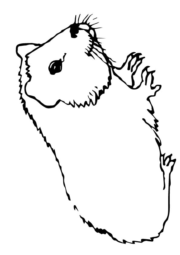 meerschweinchen-ausmalbild-0004-q2