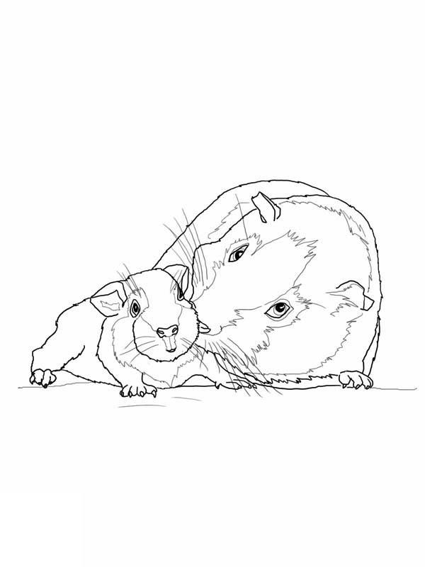 meerschweinchen-ausmalbild-0015-q1