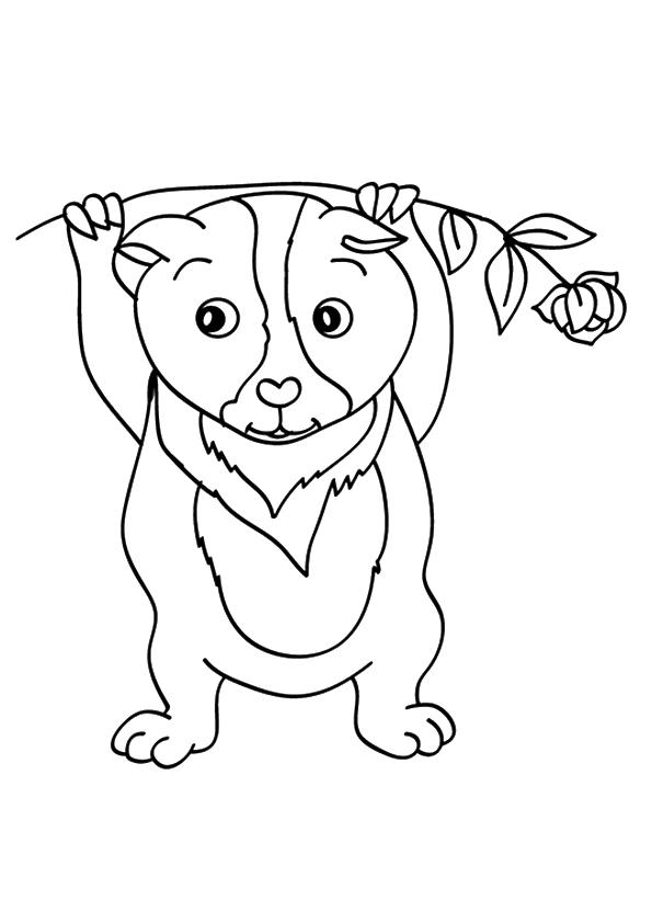 meerschweinchen-ausmalbild-0024-q2