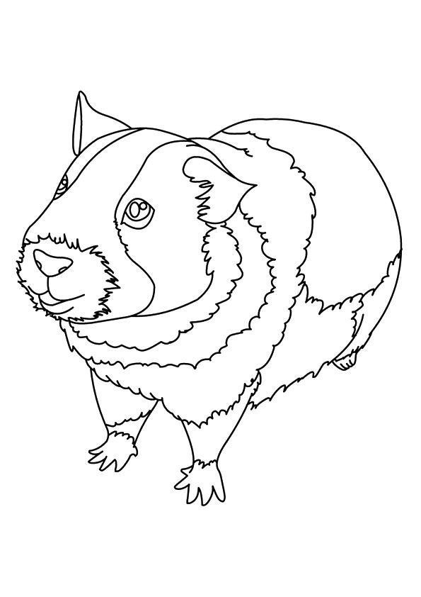meerschweinchen-ausmalbild-0027-q2