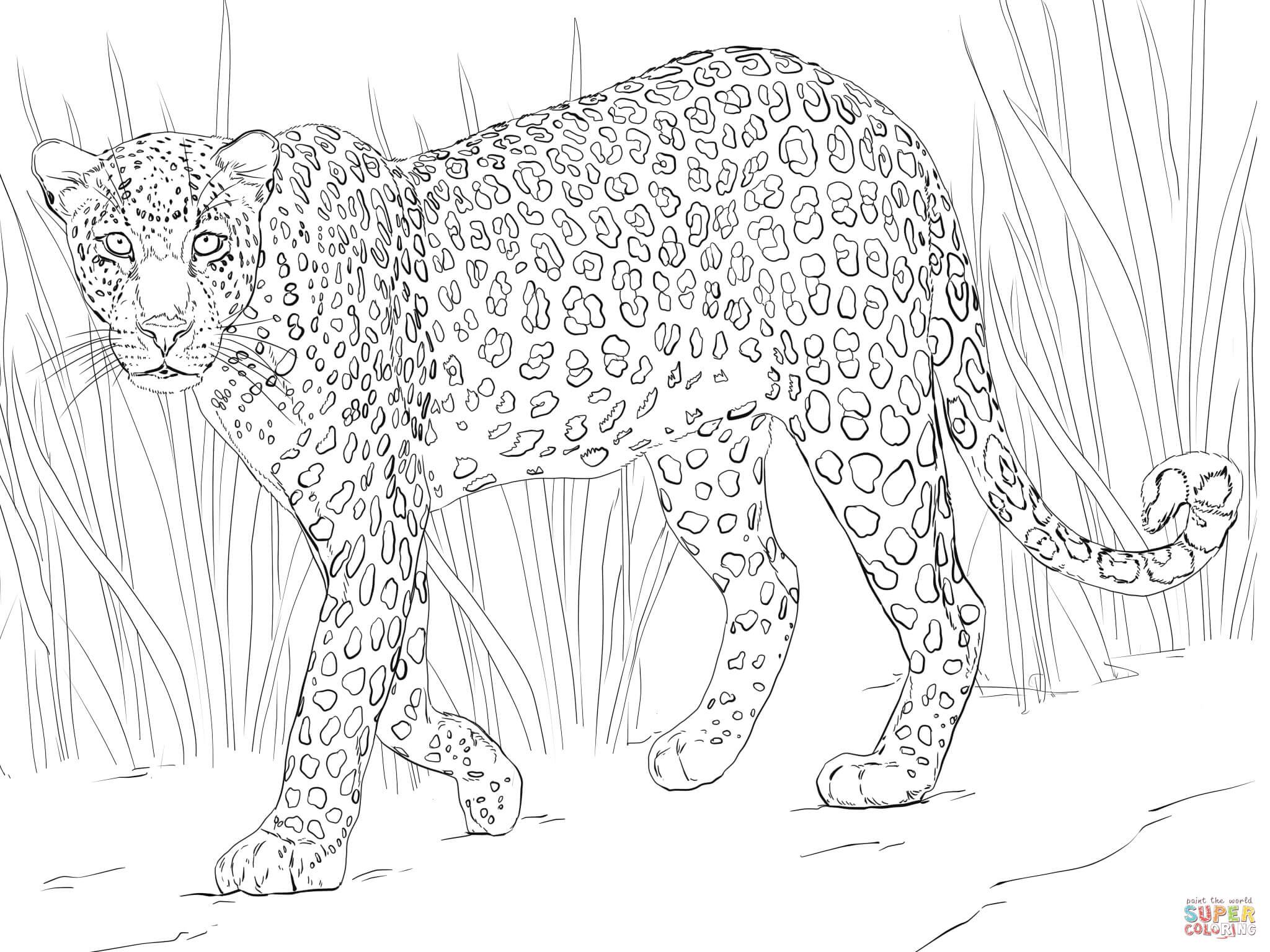 ▷ Leopard: Ausmalbilder & Malvorlagen - 30% KOSTENLOS