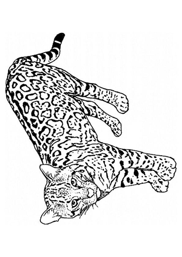 leopard ausmalbilder  malvorlagen  100 kostenlos