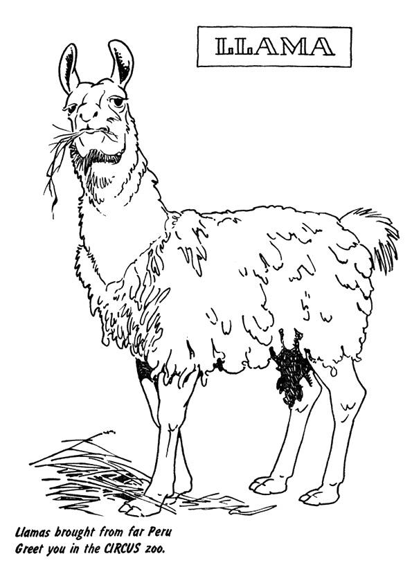 llama-ausmalbild-0003-q2