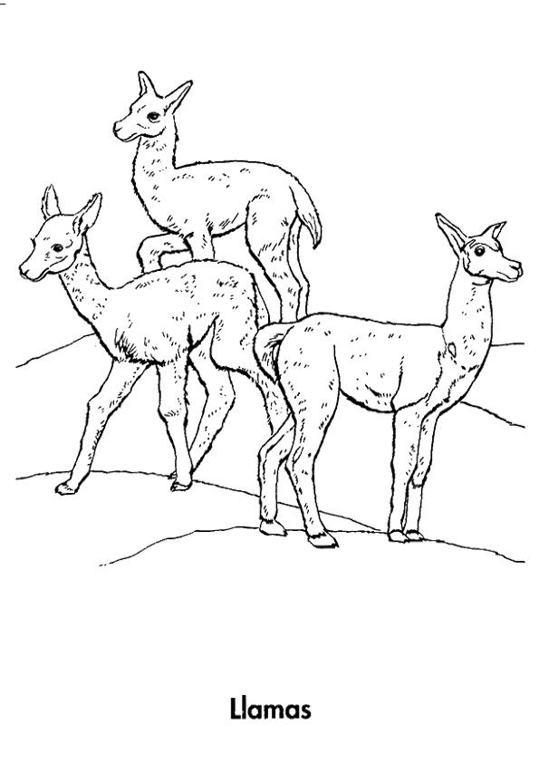 llama-ausmalbild-0004-q2