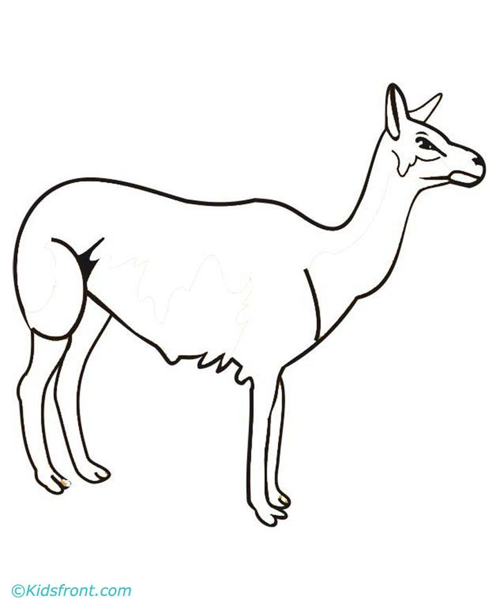 llama-ausmalbild-0017-q1