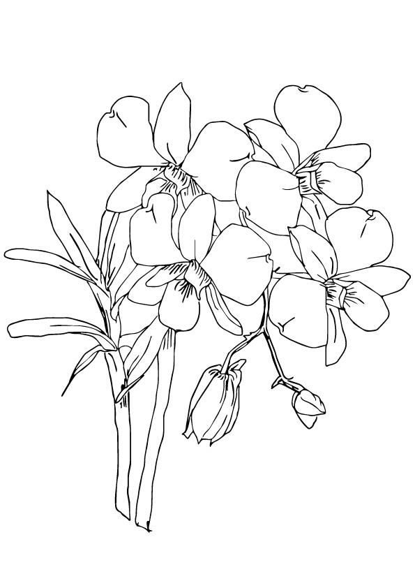 orchidee ausmalbilder  malvorlagen  100 kostenlos