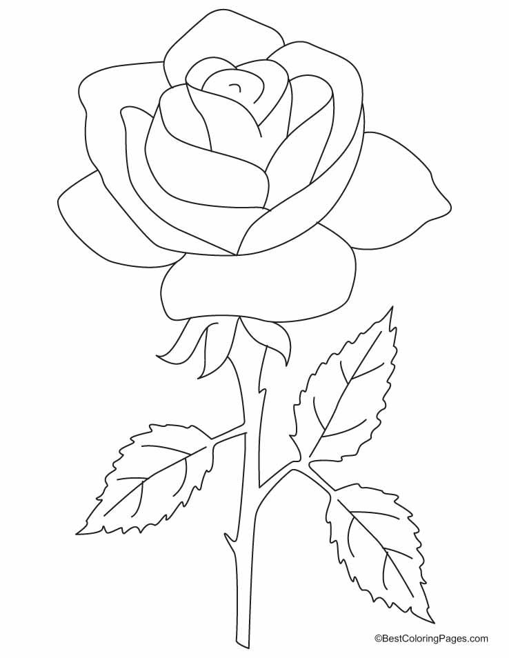 rose ausmalbilder  malvorlagen  100 kostenlos