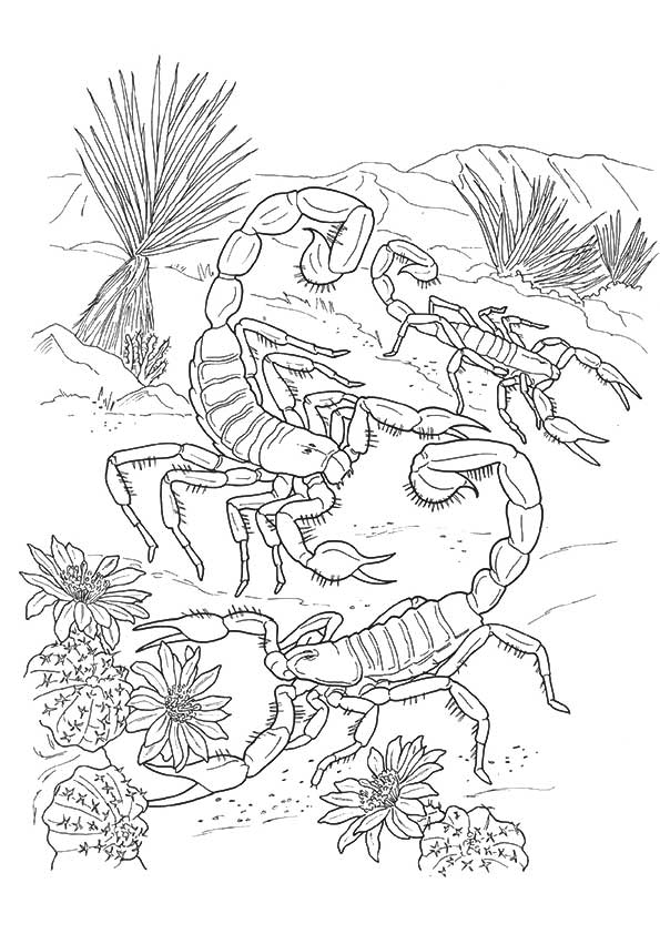 skorpion ausmalbilder  malvorlagen  100 kostenlos