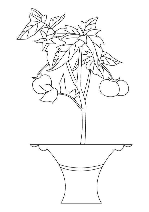 tomate-ausmalbild-0008-q2