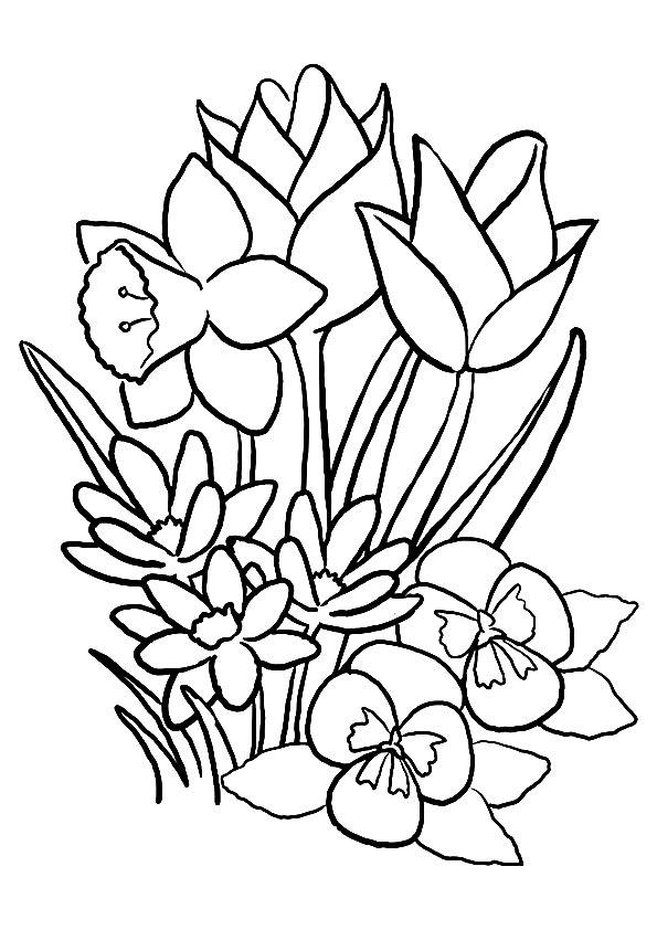 tulpe ausmalbilder  malvorlagen  100 kostenlos