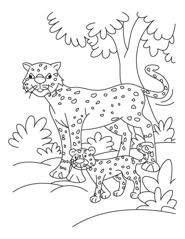 gepard ausmalbilder  malvorlagen  100 kostenlos