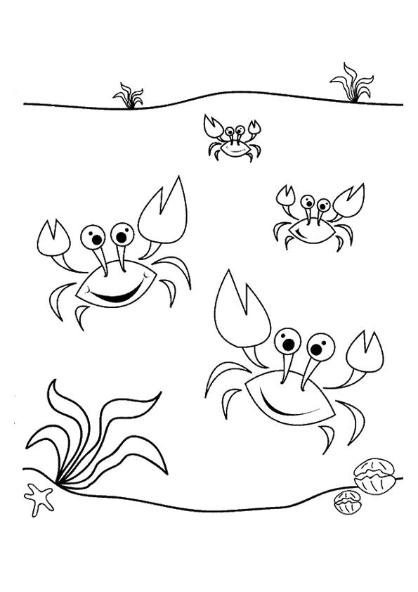 krebs  krabbe ausmalbilder  malvorlagen  100 kostenlos