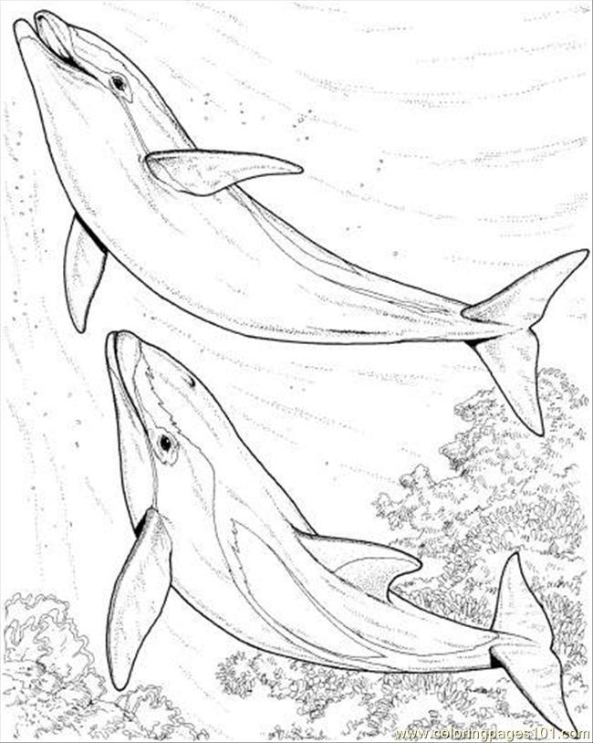 delphine ausmalbilder  malvorlagen  100 kostenlos