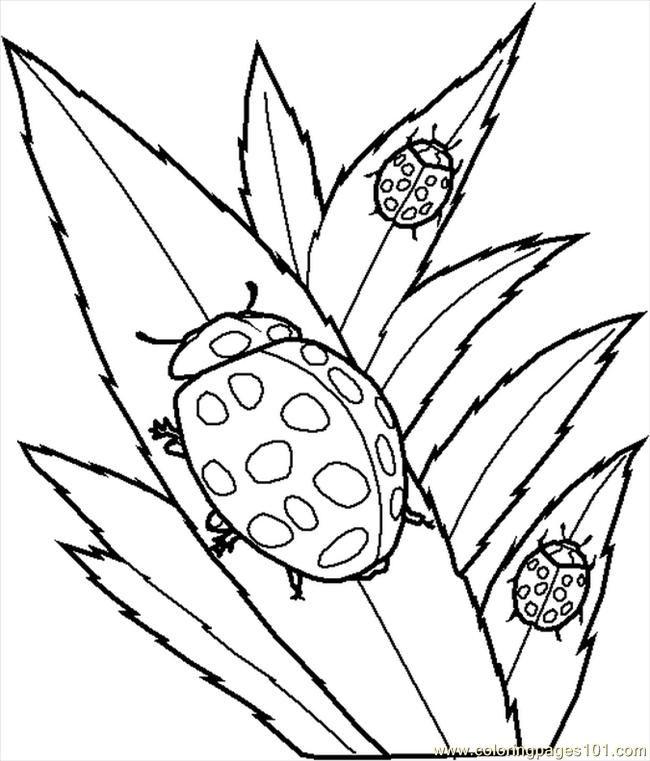 insekt-ausmalbild-0027-q1