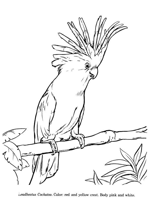 papagei ausmalbilder  malvorlagen  100 kostenlos