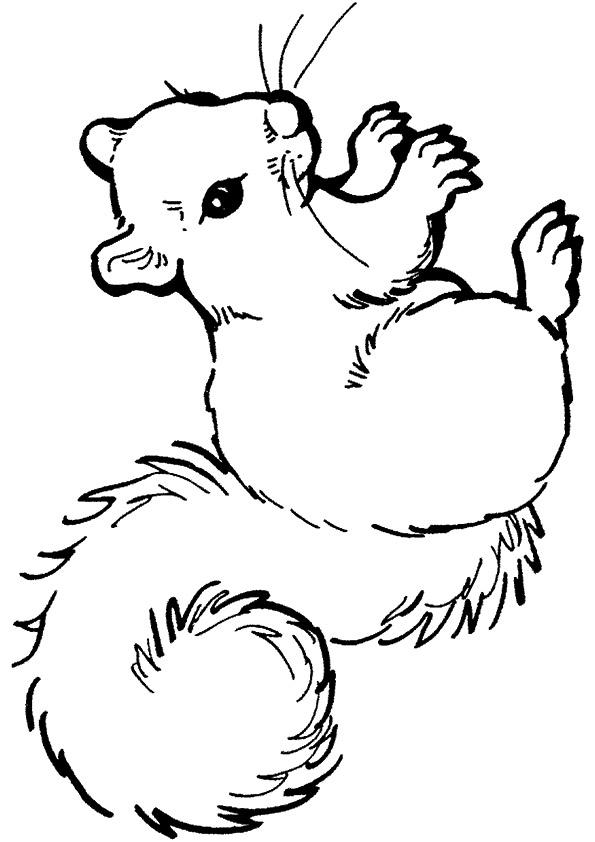 eichhörnchen ausmalbilder  malvorlagen  100 kostenlos