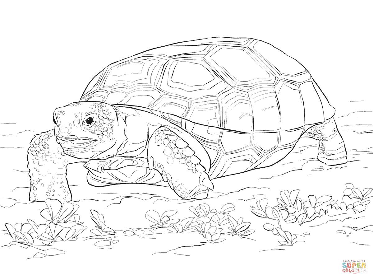 Schildkröte: Ausmalbilder & Malvorlagen - 100% KOSTENLOS